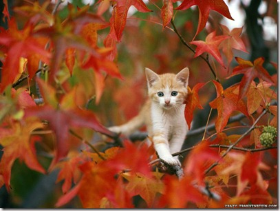 cat-in-autumn-wallpaper