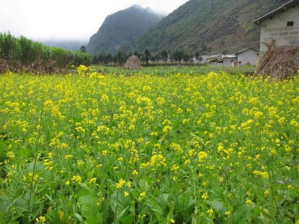 Mùa hoa dưới thung lũng