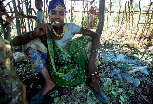 Nhai lá qat ở Ethiopia