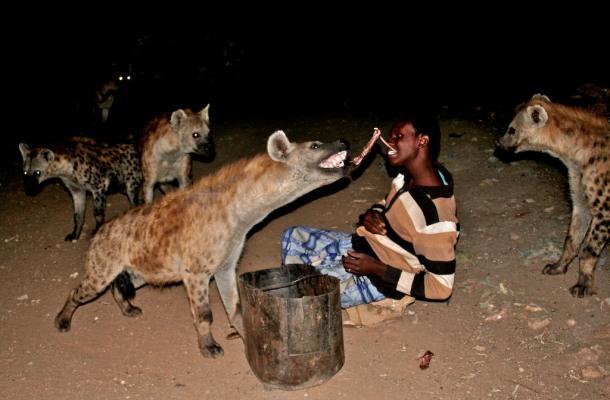 Người chăn linh cẩu ở Ethiopia