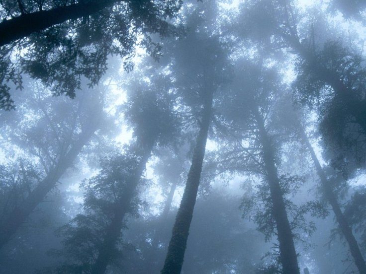 foggy_forest_by_avabloom-d5sw4pn