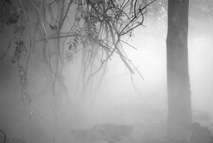into_the_foggy_woods_by_bmxer197-d2zfw5l