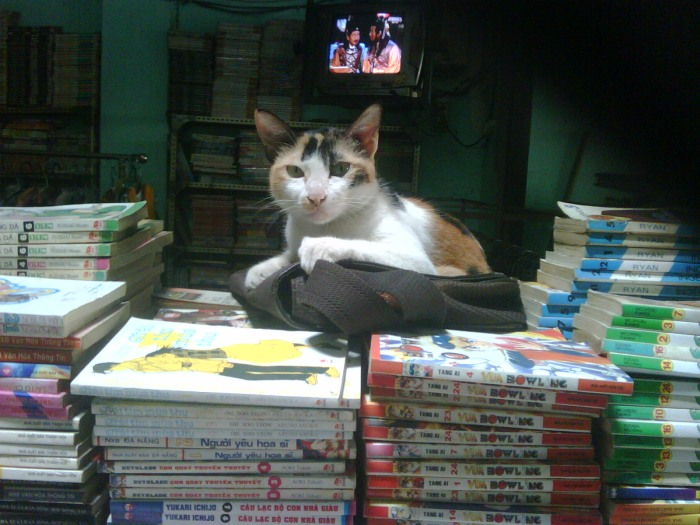 Một hiệu sách cũ bán cân kg như ve chai ở quận 11 - Bonus mua sách xem mèo :3