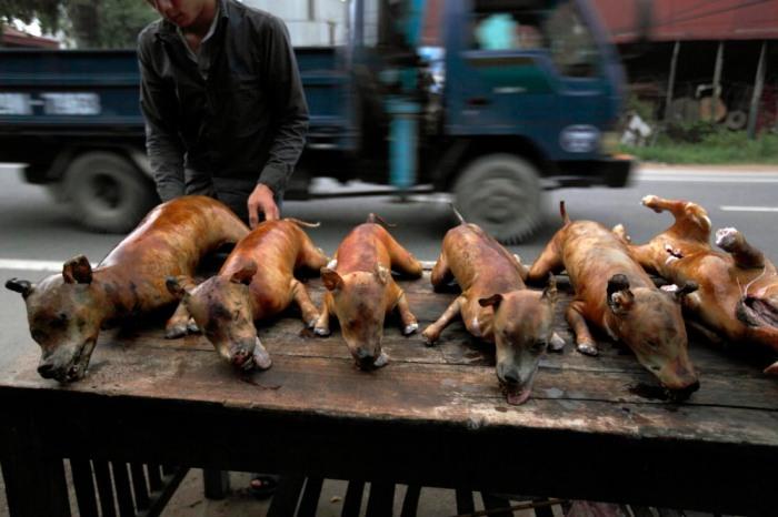 Thịt chó được bày bán ở Hà Nội. Ảnh: Luke Duggleby